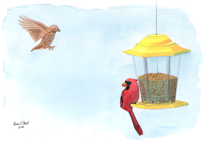 House Finch & Cardinal