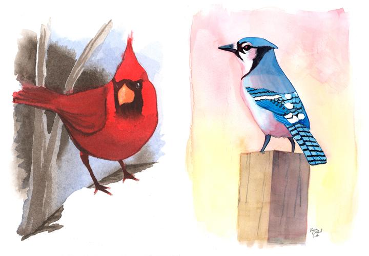 Cardinal & Bluejay